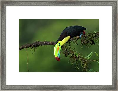 The Colors Of Costa Rica Framed Print