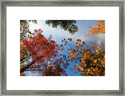 Looking Up Framed Print by MaryGail Perkins