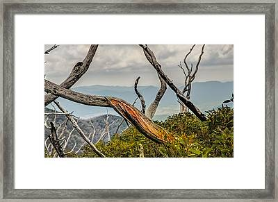 The Colour Within Framed Print by Mark Lucey
