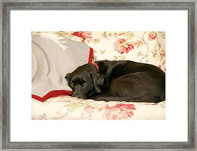 Framed Print featuring the photograph I Don't Want To Get Off This Sofa by Colleen Williams