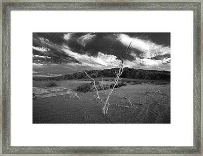 The Conductor Framed Print by Peter Tellone