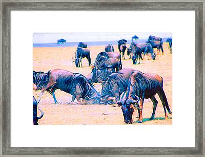 The Conflict Framed Print