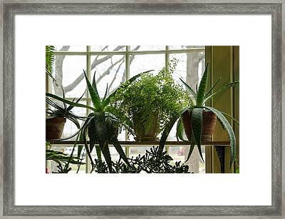 The Conservatory At Limberlost Framed Print by Maria Suhr