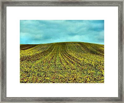 The Corn Rows Framed Print