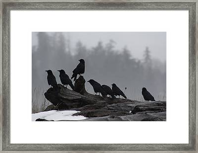Framed Print featuring the photograph The Corvidae Family  by Cathie Douglas