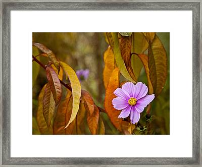 The Cosmos In The Peach Tree Framed Print by Theresa Tahara