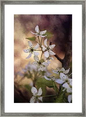 The Cotillion Framed Print