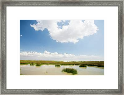 The Coto Donana Framed Print by Ashley Cooper