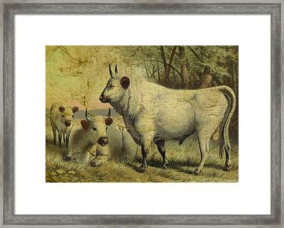 The Cows Came Home Framed Print by Sarah Vernon