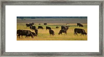 The Cows Won't Mind Framed Print