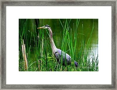 The Crane 2010. No.2 Framed Print by RL Clough