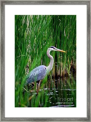 The Crane 2010. No.3 Framed Print by RL Clough