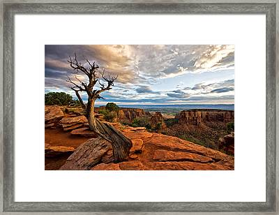 The Crooked Old Tree Framed Print