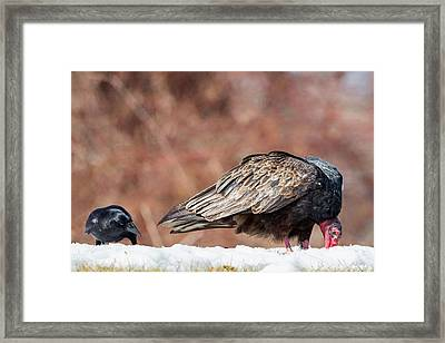 The Crow And Vulture Framed Print