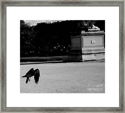 The Crow Framed Print