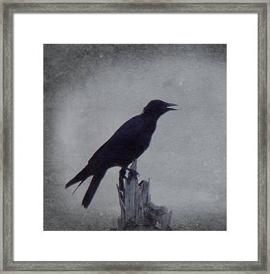 The Crow Framed Print by Justin Ivins