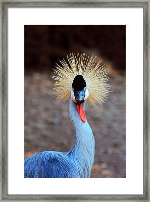 The Crowned Crane Framed Print