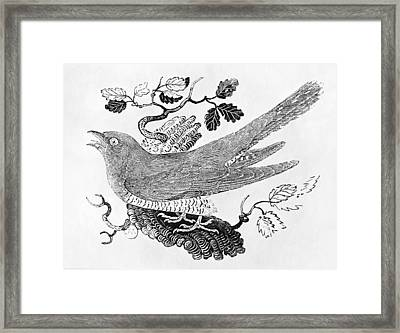 The Cuckoo Cuculus Canorus From The History Of British Birds Volume I, Pub. 1797 Wood Engraving Framed Print by Thomas Bewick