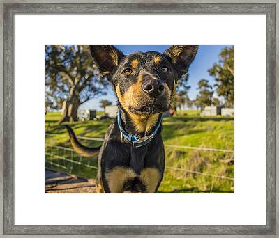 Framed Print featuring the photograph The Curious Dog  by Naomi Burgess