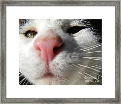 The Curious Mickey Framed Print by CML Brown