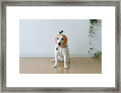 The Cute Dog With A Tangerine Cap Framed Print by Hazelog