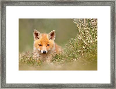 The Cute Kit Framed Print by Roeselien Raimond