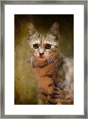 The Cutest Kitty Framed Print