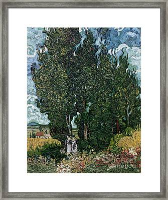 The Cypresses Framed Print by Vincent van Gogh