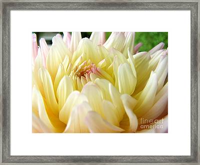 Framed Print featuring the photograph Yellow Dahlia by Margie Amberge