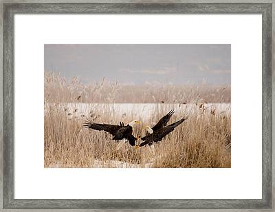 The Dance Framed Print by Jeremy Farnsworth
