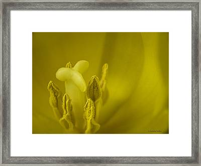 Framed Print featuring the photograph The Dance by Lucinda Walter