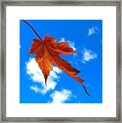 The Dance Of Autumn Framed Print