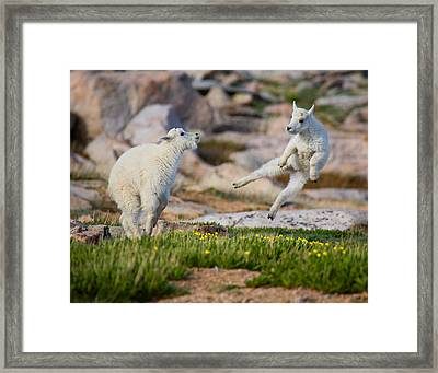 Framed Print featuring the photograph The Dance Of Joy by Jim Garrison