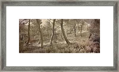 The Dance Of The Forest Framed Print by Guido Montanes Castillo