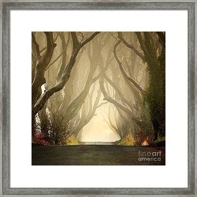 The Dark Hedges 2011 Framed Print by Pawel Klarecki