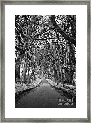 The Dark Hedges Beech Tree Avenue In Winter County Antrim Northern Ireland Framed Print
