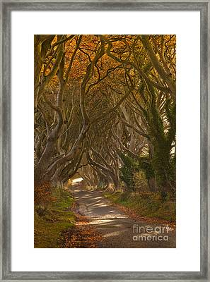 The Dark Hedges In Autumn Framed Print