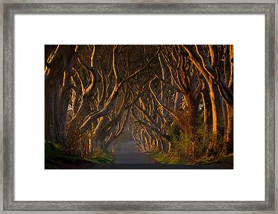 The Dark Hedges In The Morning Sunshine Framed Print by Piotr Galus