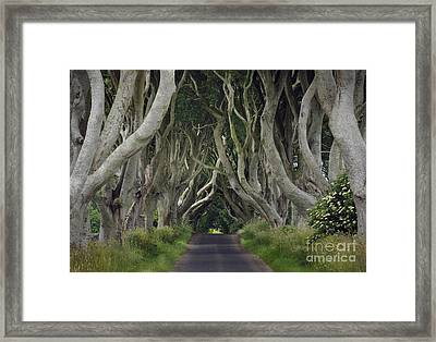 The Dark Hedges, Northern Ireland Framed Print by John Shaw