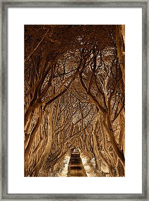 The Dark Hedges Framed Print by Pierre  TORNERO