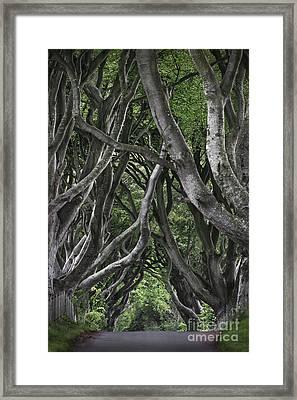 The Dark Hedges Framed Print by Svetlana Sewell