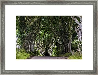 The Dark Hedges Framed Print by Wonderful Ireland