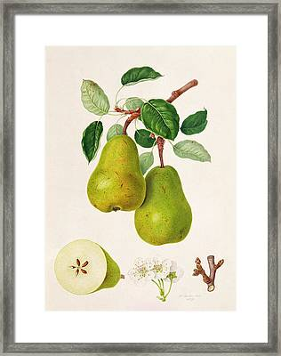 The D'auch Pear Framed Print by William Hooker