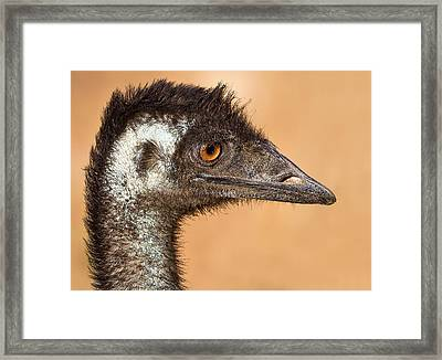 The Day I Met An Emu Framed Print by Mr Bennett Kent