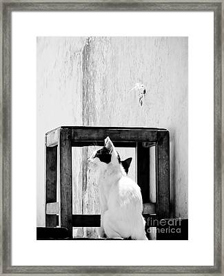 The Daydreamer Cat Framed Print by Trish Oliveira