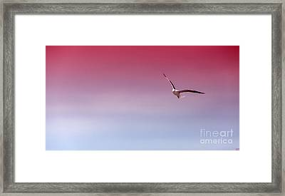The Days Flight Framed Print by David Millenheft