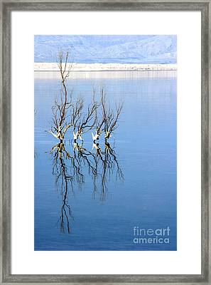 The Dead Sea Framed Print by Arie Arik Chen
