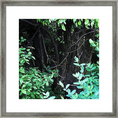 Framed Print featuring the photograph The Deep Dark Woods by Thomasina Durkay