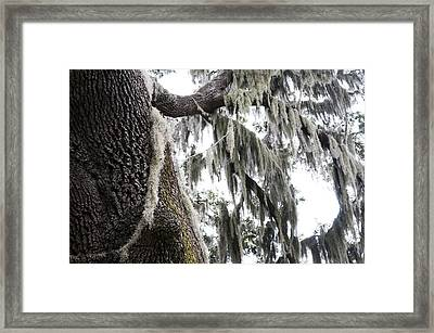 The Deep South Framed Print by Kenneth Albin