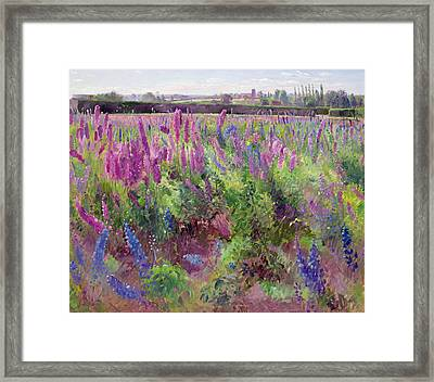 The Delphinium Field Framed Print by Timothy Easton